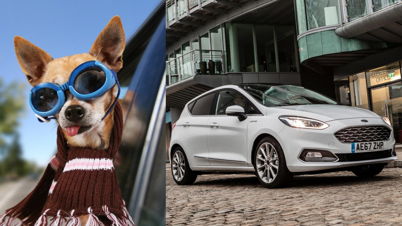 Chủ chó trả bảo hiểm cao hơn chủ xe sang