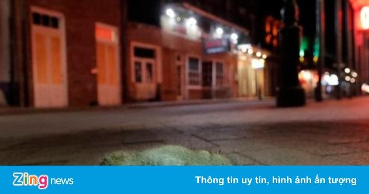 Chuột tràn lan trên đường phố New Orleans do thiếu đồ ăn