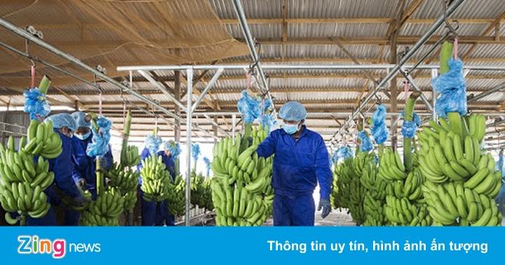 Công ty nông nghiệp của bầu Đức lỗ thêm 350 tỷ đồng