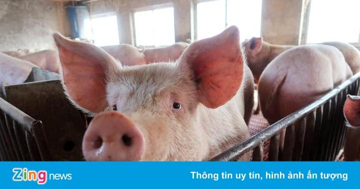 Thủ tướng yêu cầu ngăn buôn lậu lợn sang Trung Quốc dịp Tết