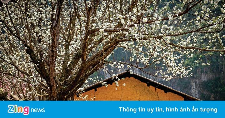 Hương sắc mùa xuân trên cao nguyên đá Hà Giang