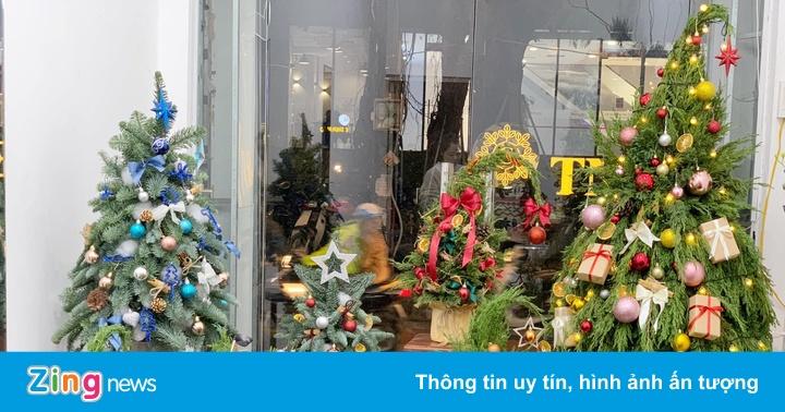 Thông tươi mini giá rẻ đắt khách dịp Noel - giáeurohômnay