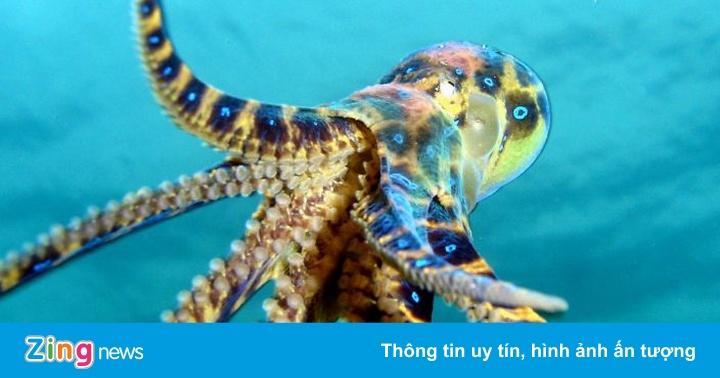 10 loài động vật có nọc độc đáng sợ nhất thế giới - Thiên nhiên - ZING.VN