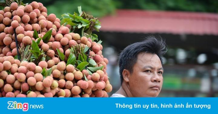Chuyên gia Nhật đã đến Việt Nam giám sát xuất khẩu vải thiều