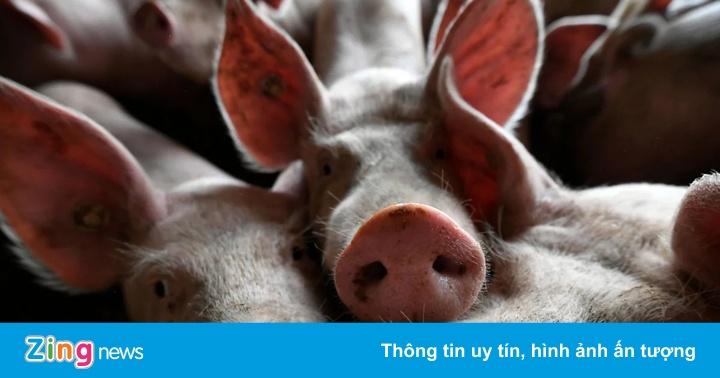 Yêu cầu tạo điều kiện thuận lợi cho nhập khẩu thịt lợn