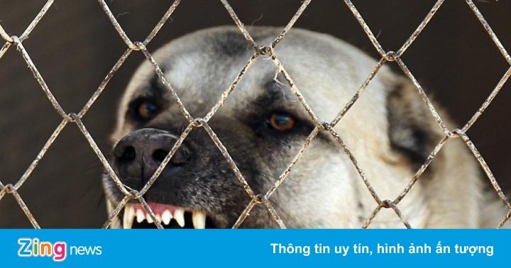 Giống chó được mệnh danh là kẻ giết sói