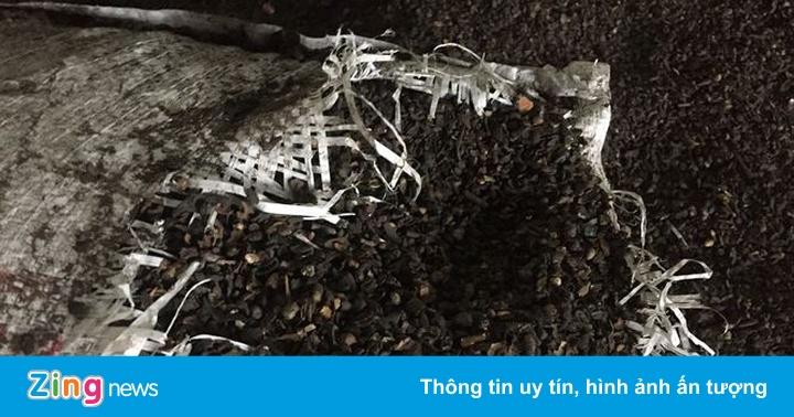 Phế phẩm cà phê nhuộm than pin được trộn vào tiêu