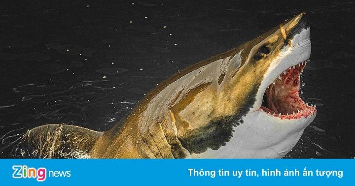 Người đi khắp nơi để ngắm hàm răng kẻ nguy hiểm nhất đại dương