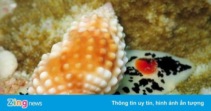 Dấu hiệu nhận biết người bị ngộ độc ốc biển