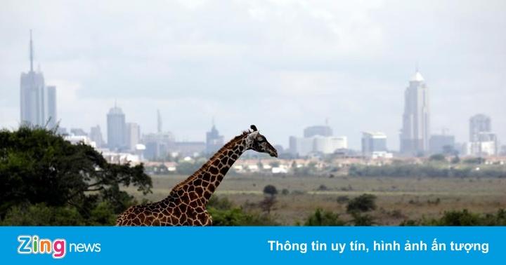 Nairobi - thủ đô duy nhất thế giới động vật hoang dã tự do đi lại