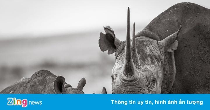 Cuộc sống yên bình của tê giác dưới ống kính nhiếp ảnh gia