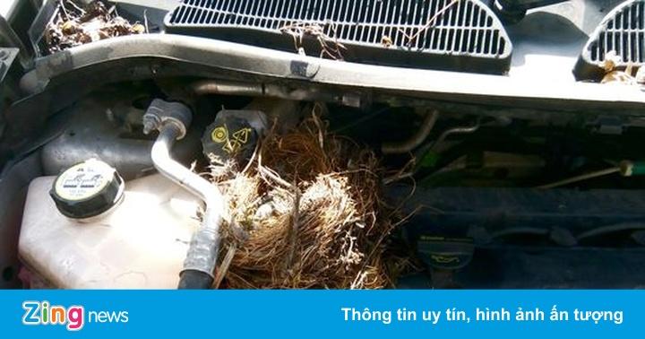 Làm sao để ngăn chuột chui vào ôtô khi gửi xe ở bãi công cộng?