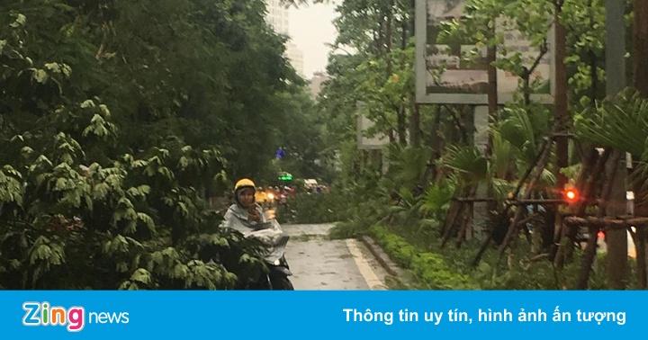 Dông mạnh bất ngờ quật đổ hàng loạt cây, bán đảo Linh Đàm ùn tắc