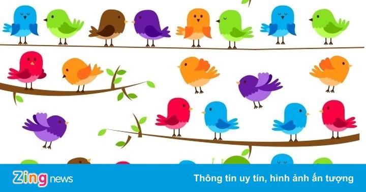 Đố bạn tìm thấy chú ốc sên giữa bầy chim trên cành cây