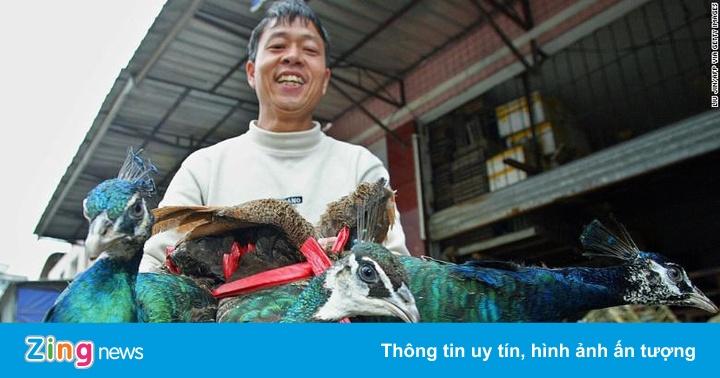 Không dễ đóng cửa thị trường động vật hoang dã 73 tỷ USD ở TQ