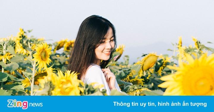 Năm mới ghé Nghệ An, check-in bên cánh đồng hoa hướng dương nở rộ
