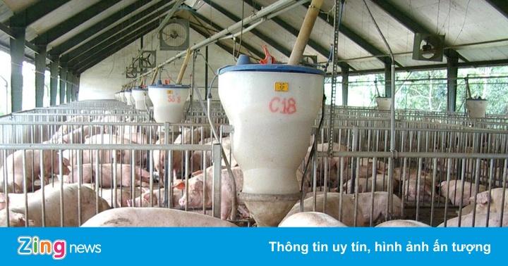 Hỗ trợ tiền, xem xét xóa nợ cho cơ sở chăn nuôi thịt lợn