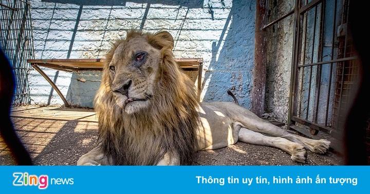 """Cảnh sát Albania giải cứu động vật khỏi """"vườn thú địa ngục"""""""