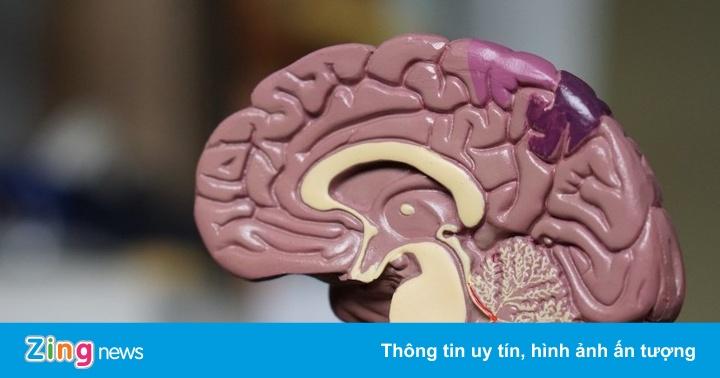 Giả thuyết tiến hóa não người gây tranh cãi hàng chục năm